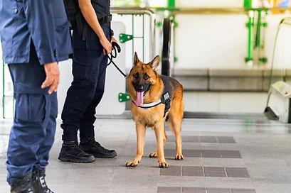 Servicios de inspeccion canina