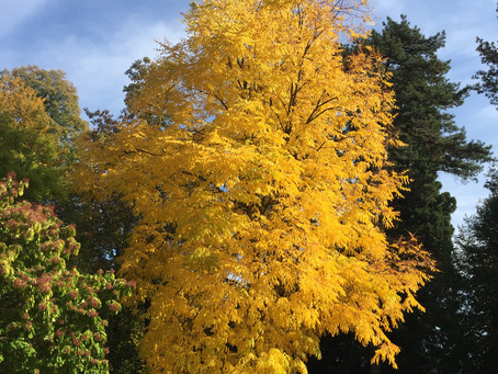 Goldiger Herbst, Annecy FR - Oktober 2020