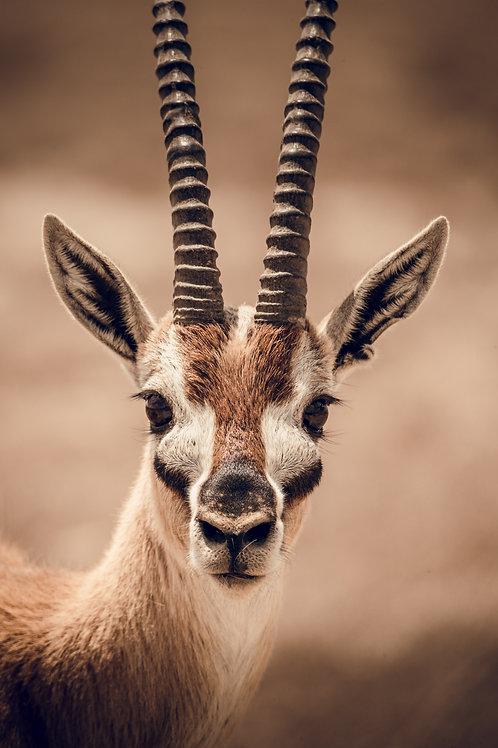 Portrait animaux Tanzanie