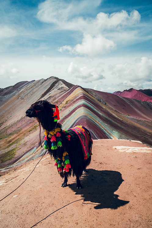 Lama Rainbow Mountain Perou