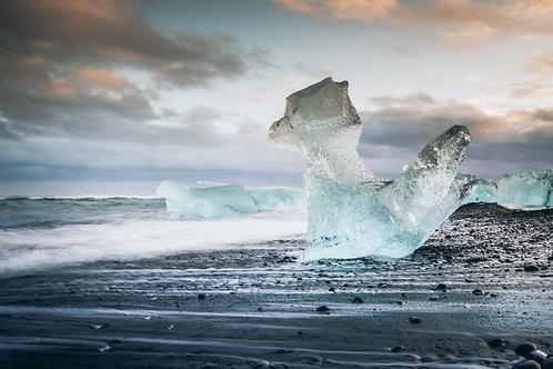 Renard en glace Islande