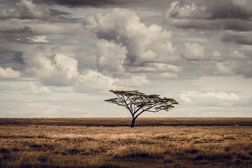 Paysage Tanzanie