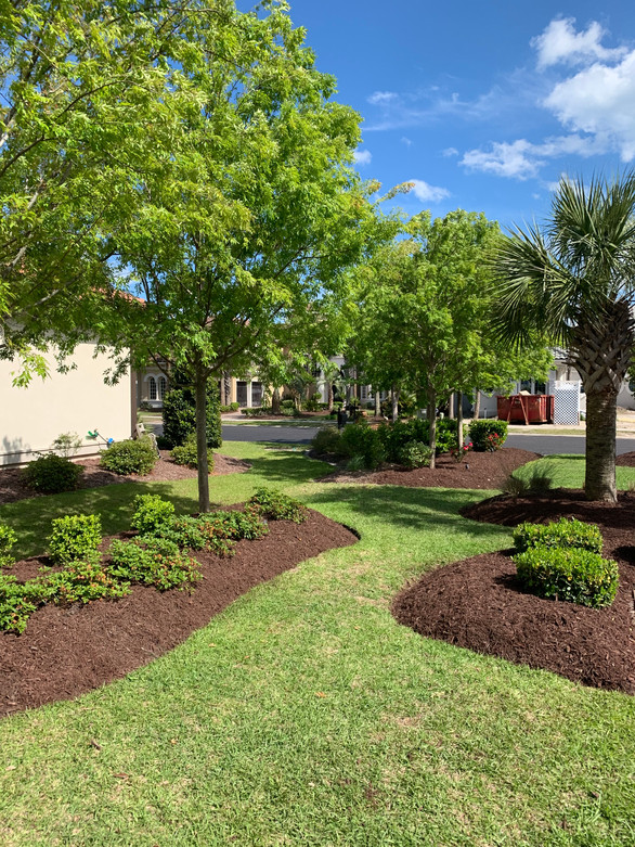 Grand Dunes lawn and mulch implementation