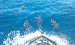 dolphins group