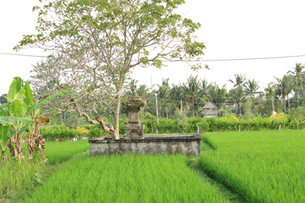 Temple in rice paddy, Lodtundah, Bali