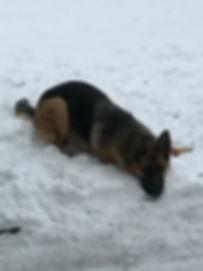 Denali, a dog trained by Smart Dog LLC