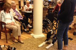 Therapy dogs at work.