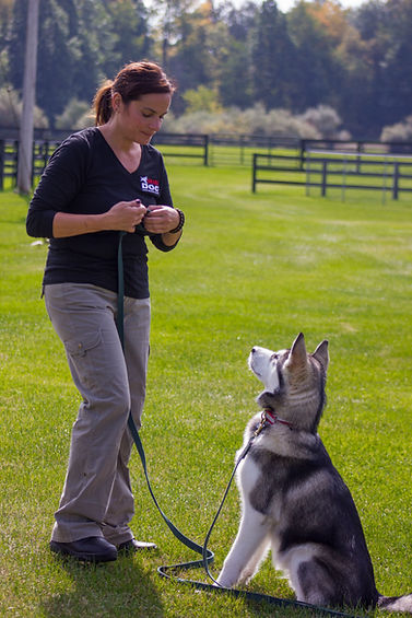 Beyond just dog training, Smart Dog trains and certifies dogs to become therapy dogs.