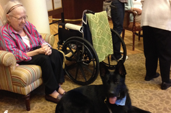 Therapy dogs make a difference