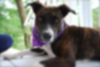 Kona was a dog trained at Smart Dog