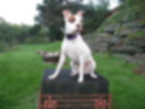 Kai is a Smart Dog canine