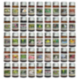 essential oil 5ml.jpg