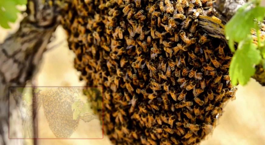 Cass Winery Beekeeping