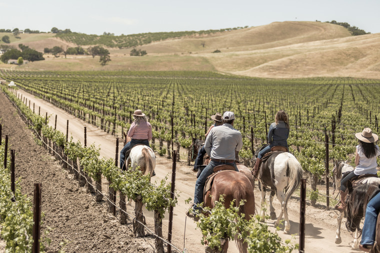 Horseback Riders in the Cass Vineyards