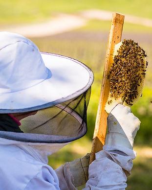 Beekeeping%20Retreat_edited.jpg