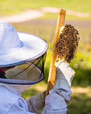 Beekeeping, Bees, Honeybees, Honey, Backyard Beekeeping, Winery Retreat