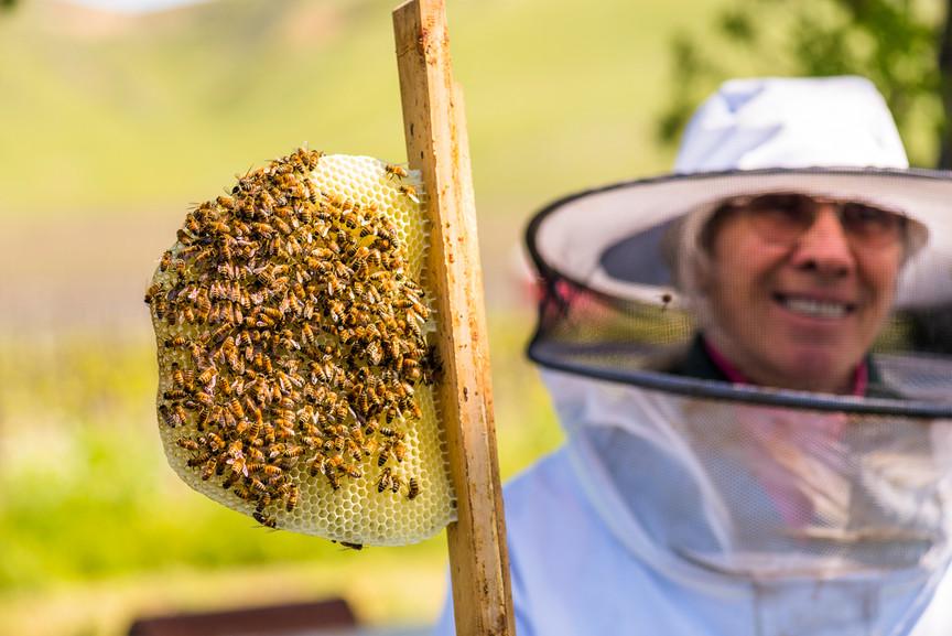 Beekeeping at Cass