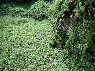 Jungle Field