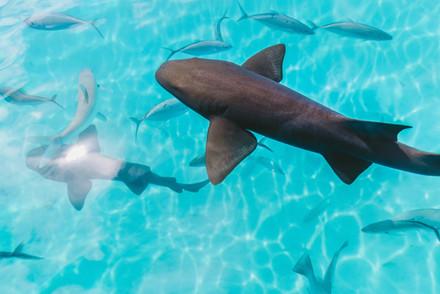 15. Fishing in Fiji .jpg
