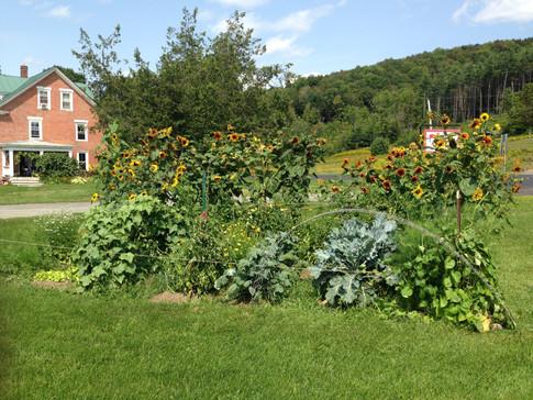 Farm house and farm vegetable garden