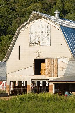 Back of old milking barn