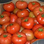 thumb_tomaten
