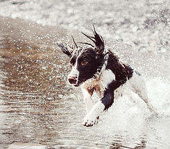 Dog%2520Running%2520in%2520Water_edited_