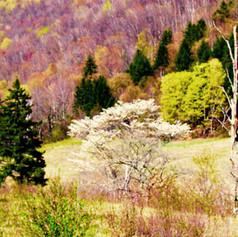 Vermont's other foliage season.jpg