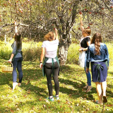 Pickin' wild apples