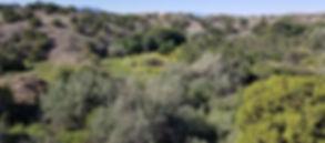 Backdrop Prototype 2.jpg