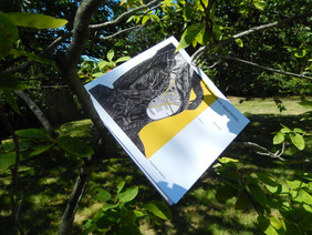 territoires sauriens, dans les arbres et dans votre boîte aux lettres