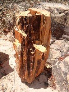 floresta-petrificada-missc3a3o-velha-chapada-do-araripe-cearc3a1-9
