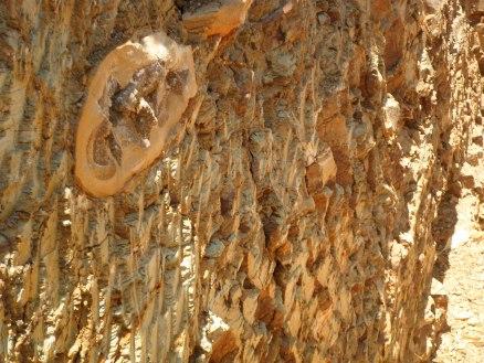 parque-dos-pterossauros-santana-do-cariri-chapada-do-araripe-cearc3a1-5