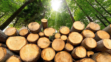 NOTICE OF TIMBER HARVEST - CALL FOR QUOTES
