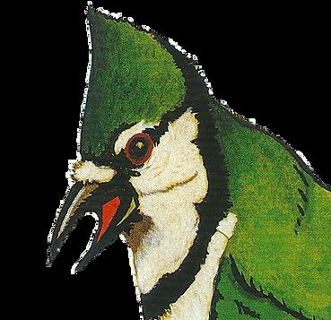 Bird artwork by Tony Fitzpatrick.