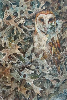 Barn Owl 11 x 14