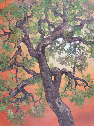 Twisted Oak II 18 x 24