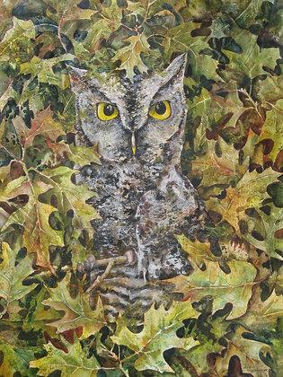 Screech Owl 11 x 14