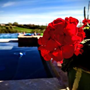 Arizona Pool