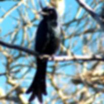 Un-oiseau-des-Terres-Blanches