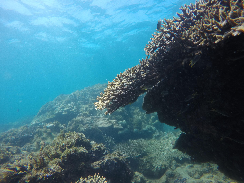 Plongé coraux poisson majunga