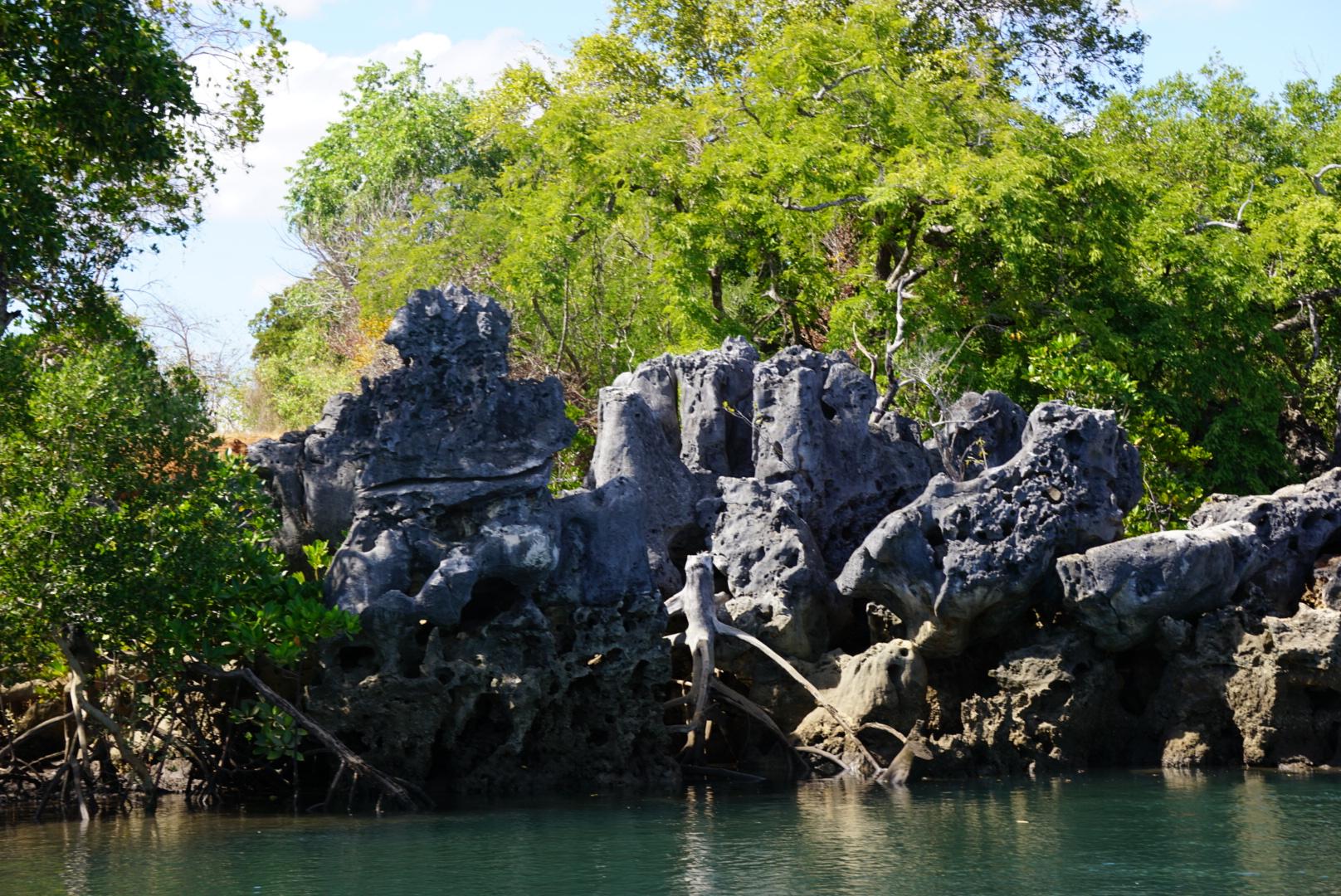 Mangrove Kirambo