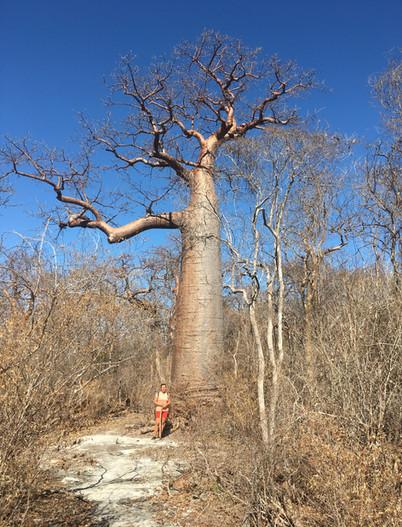 Allée baobab 05.JPG