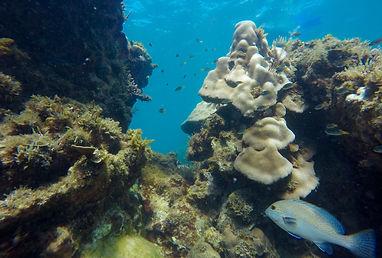 Récif de corail Lodge des Terres Blanches