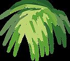 Tropical Leaf