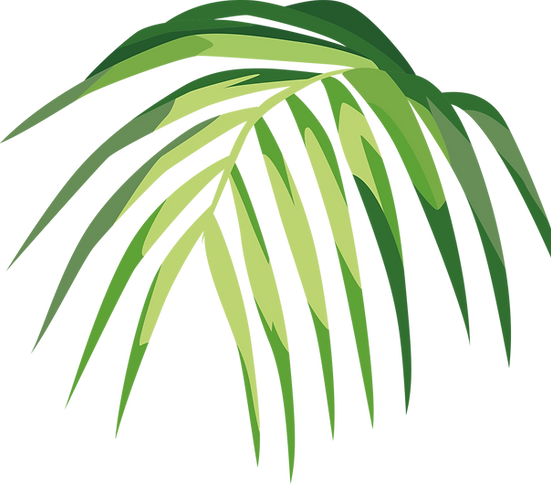 Feuille tropicale