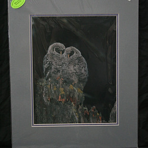 In-Stock Prints - Avian Life