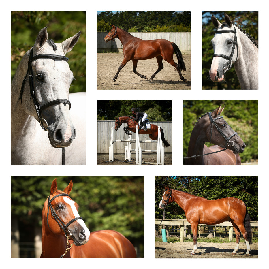 Photography for Xtreme Sport Horses.
