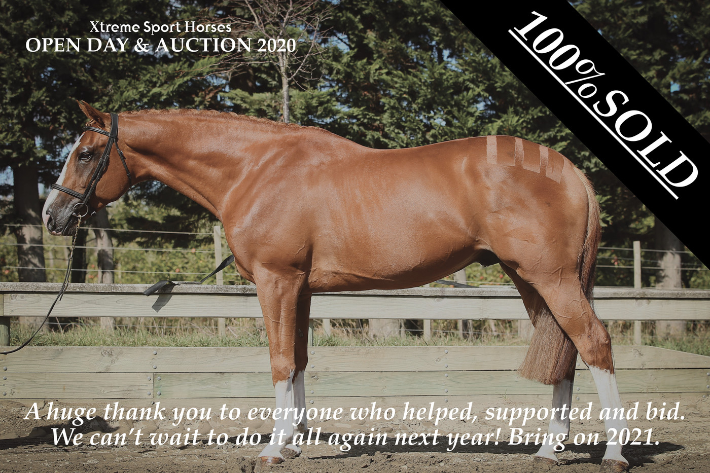 Online Auction for Xtreme Sport Horses.
