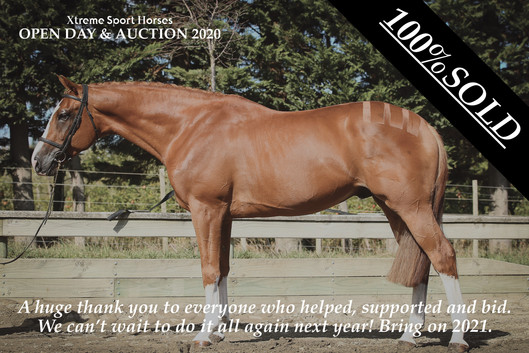 Online Auction for Xtreme Sport Horses.